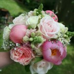 Coral peonies, Antirrhinum and roses